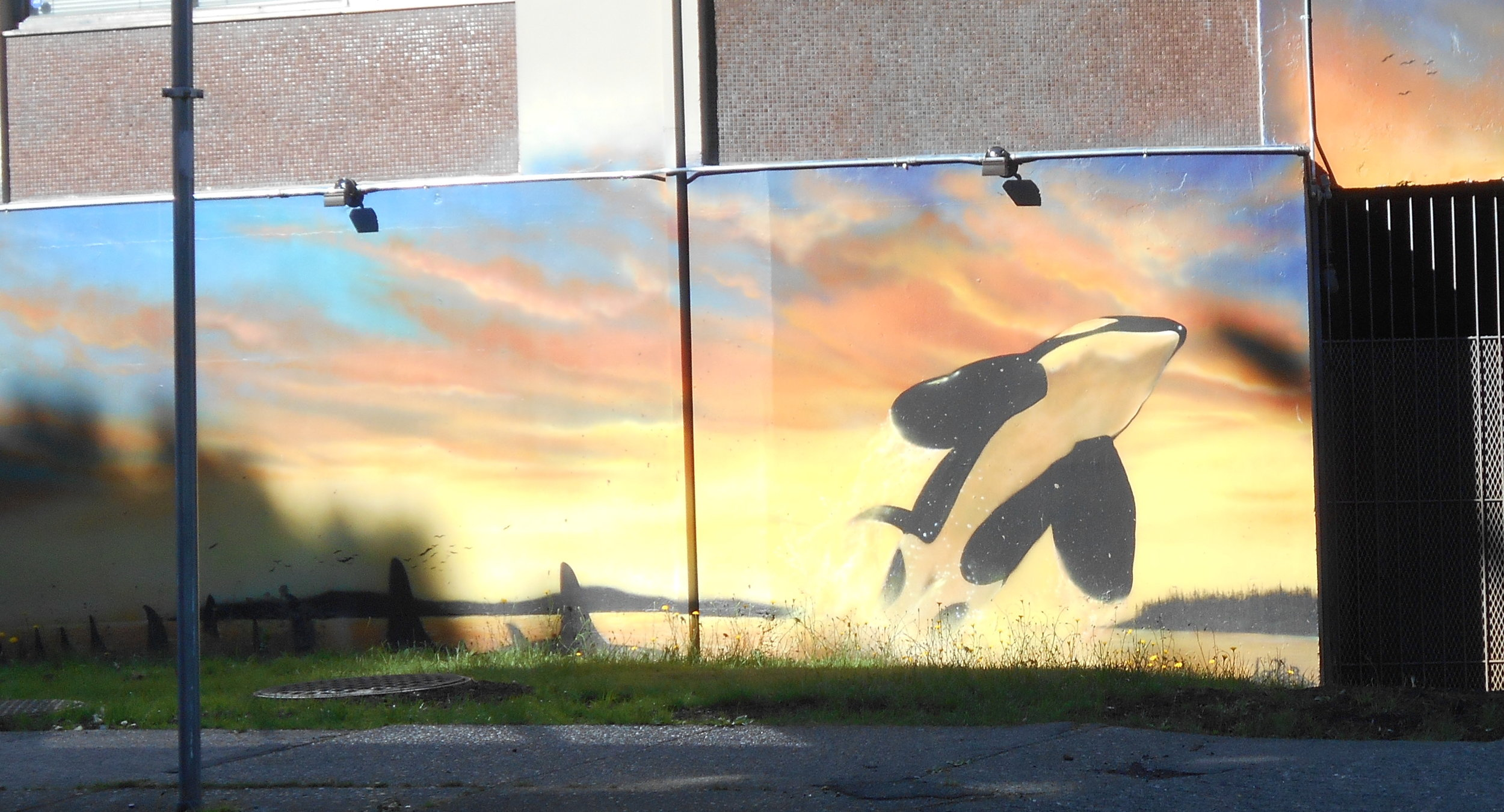 Orca leaping on a Beach Avenue wall.