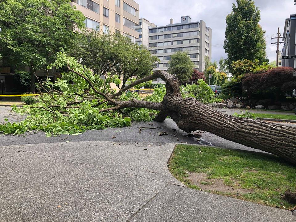 Tree Down II : Jacqui Birchall.jpg
