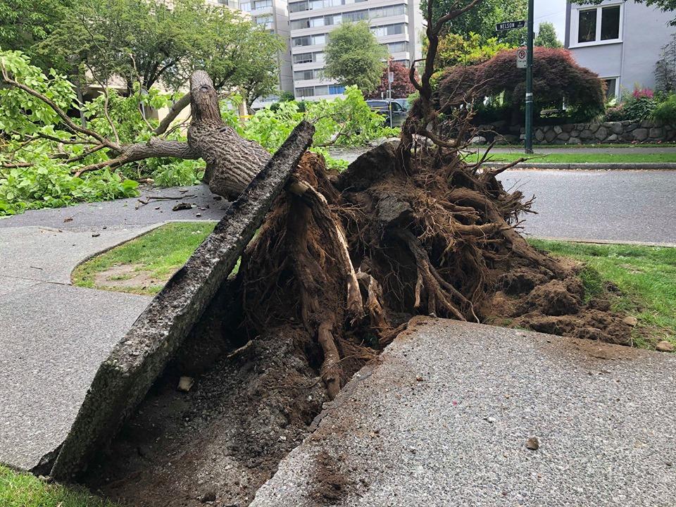 Tree Down III : Jacqui Birchall.jpg