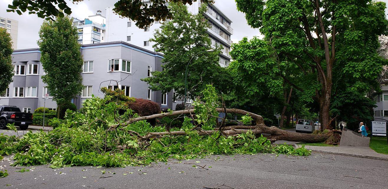 Tree Down IV : Jacqui Birchall.jpg