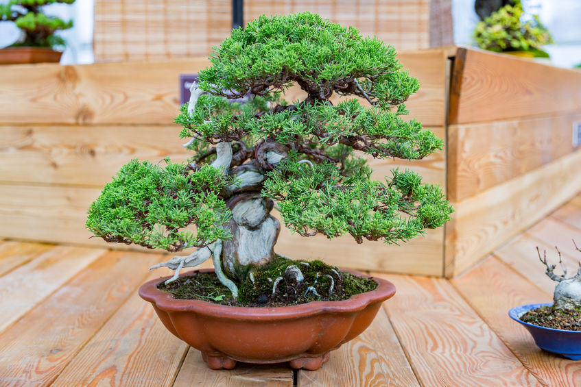 … a bonsai may be the way to go!