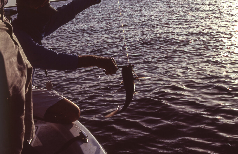 Fishing016.jpg
