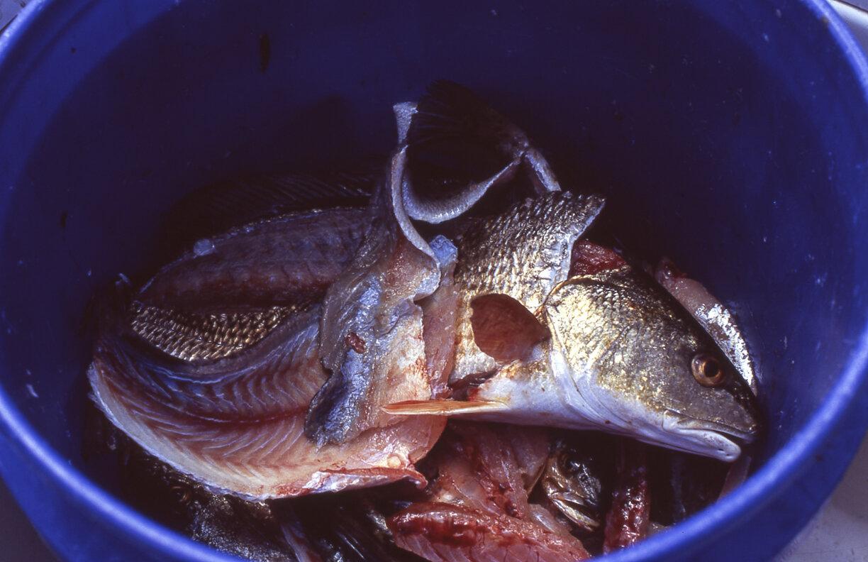 Fishing033.jpg
