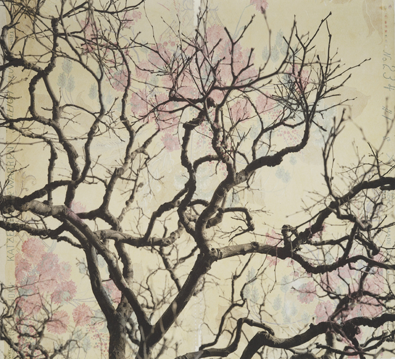 "Branches and Boughs III,  2009   Archival digital pigment print on kozo shi, vintage wallpaper   20"" X 21.5"""