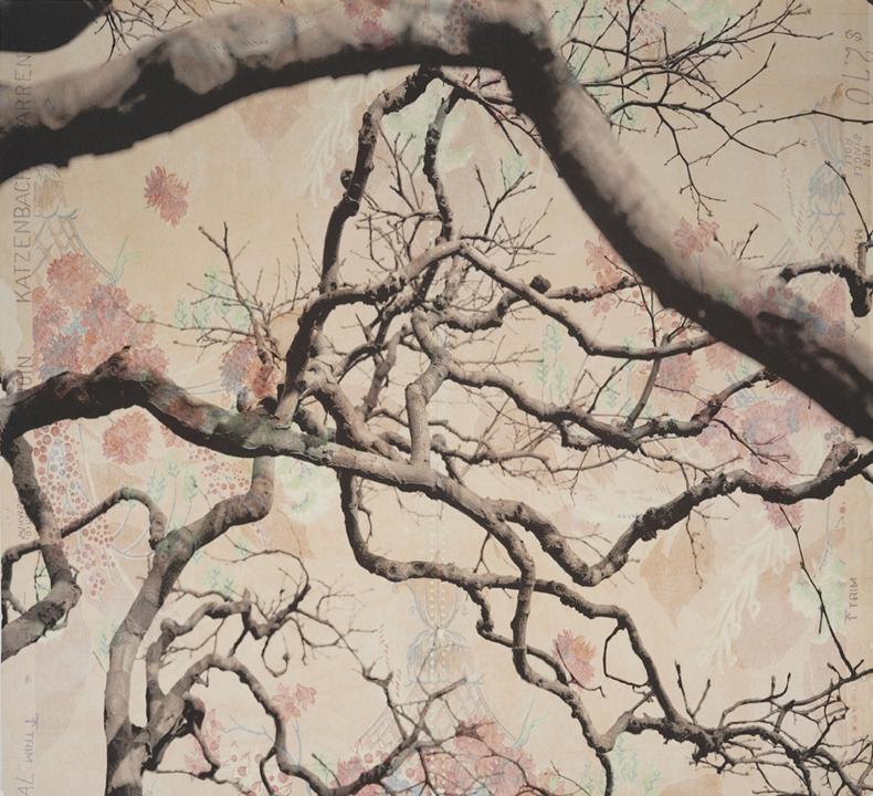 "Branches and Boughs IV,  2009   Archival digital pigment print on kozo shi, vintage wallpaper   20"" X 21.5"""