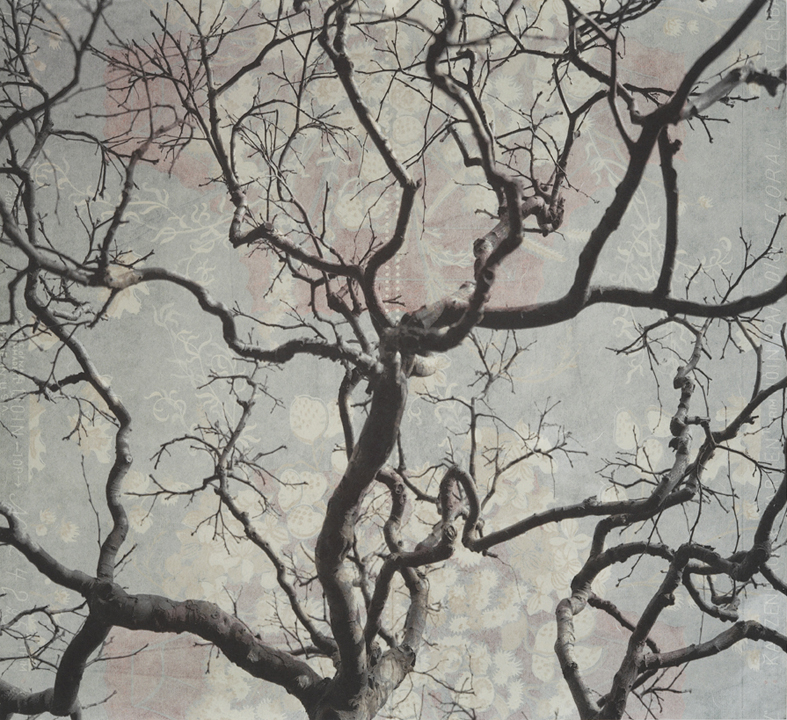 "Branches and Boughs IX,  2009   Archival digital pigment print on kozo shi, vintage wallpaper   20"" X 21.5"""