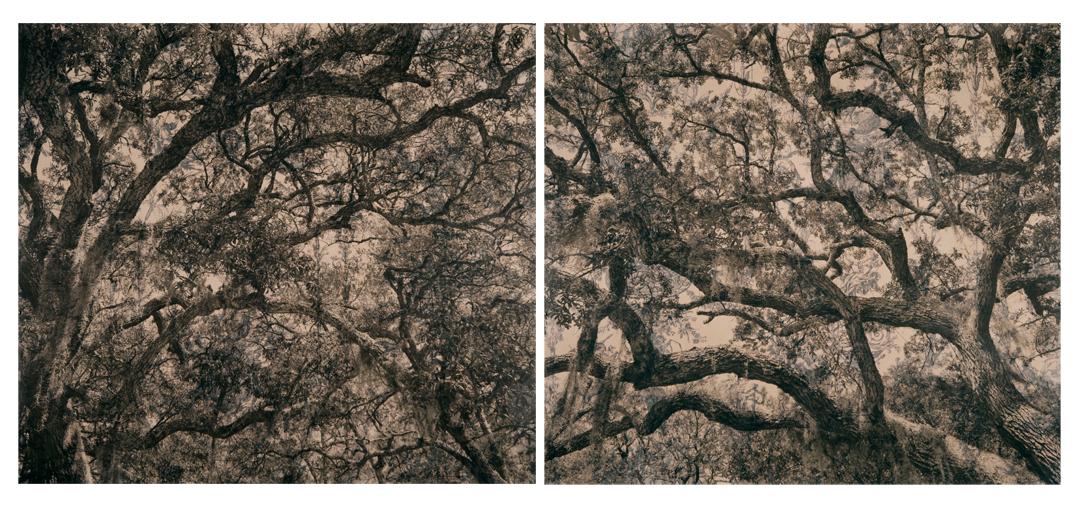 "Live Oak Toile Diptych,  2010   Digital pigment print on kozo shi, wallpaper, wax   30"" x 74"""