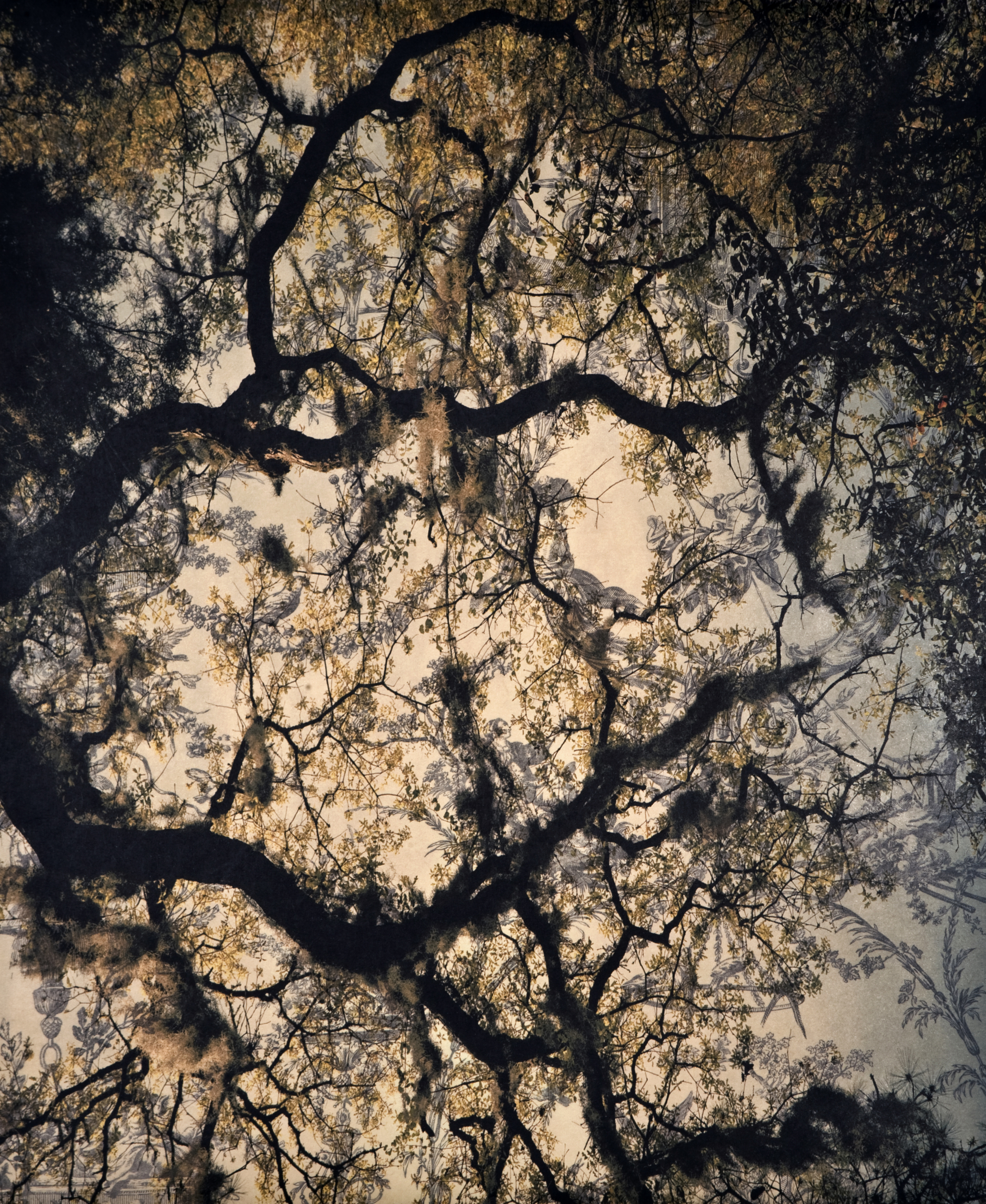 "Spanish Moss Toile VI, 2010   Archival digital pigment print on kozo shi, wallpaper, wax   24"" X 20"""