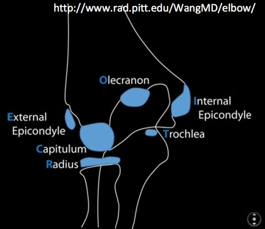 Normal Ossification Centers of the Elbow