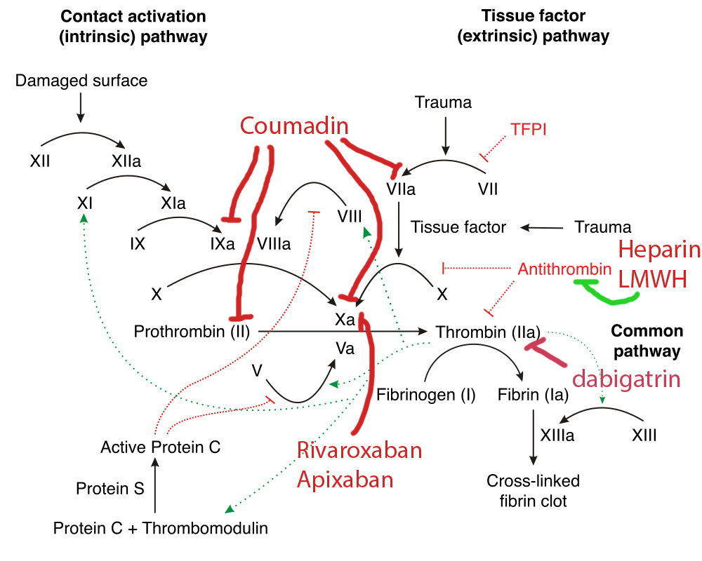 common anticoagulants effects on the COAGULATION CASCADE - LICENSED FOR REUSE BY CC SA-3.0 - modifed from the ORIGINAL AVAILABLE AT HTTPS://COMMONS.WIKIMEDIA.ORG/WIKI/FILE:COAGULATION_FULL.SVG