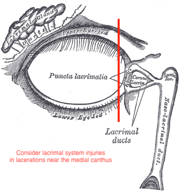 Figure 3. Lacrimal Anatomy. Courtesy of Wikimedia Commons (8).