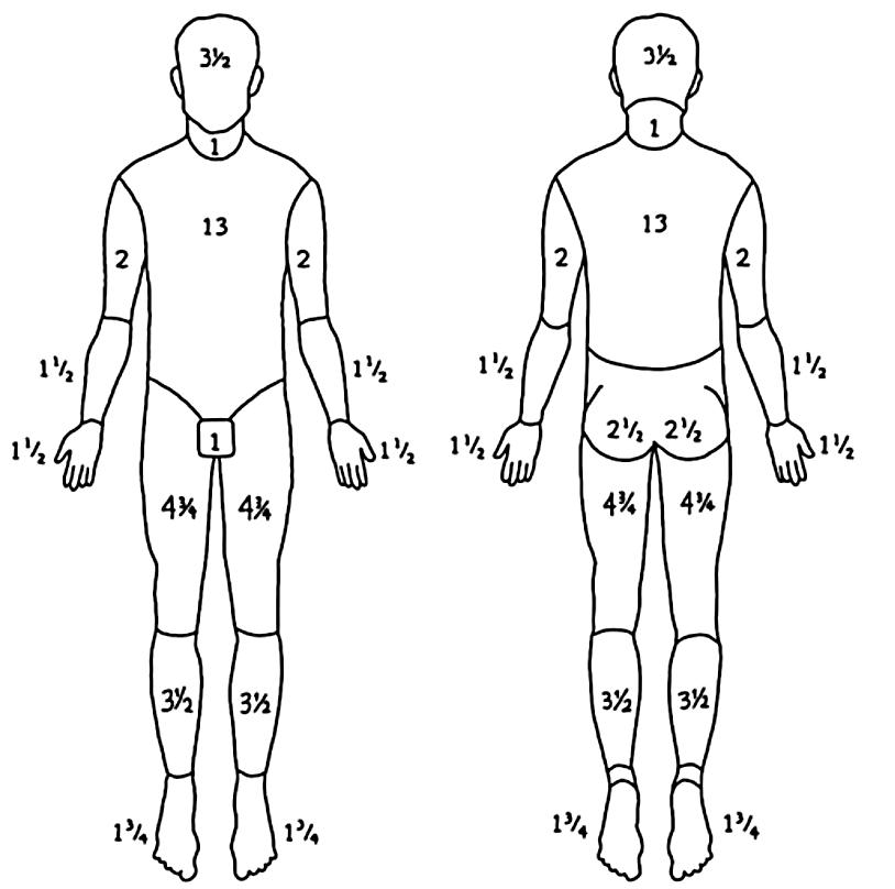 Figure 2: Lund-Browder diagram