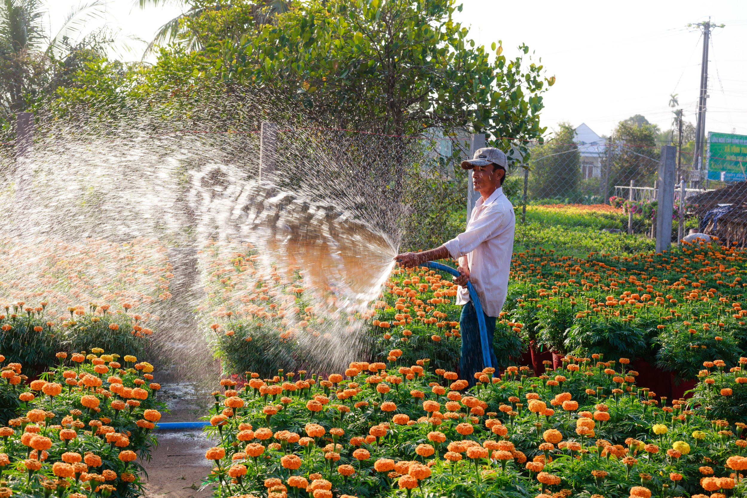 agriculture-beautiful-flowers-farm-2134798.jpg