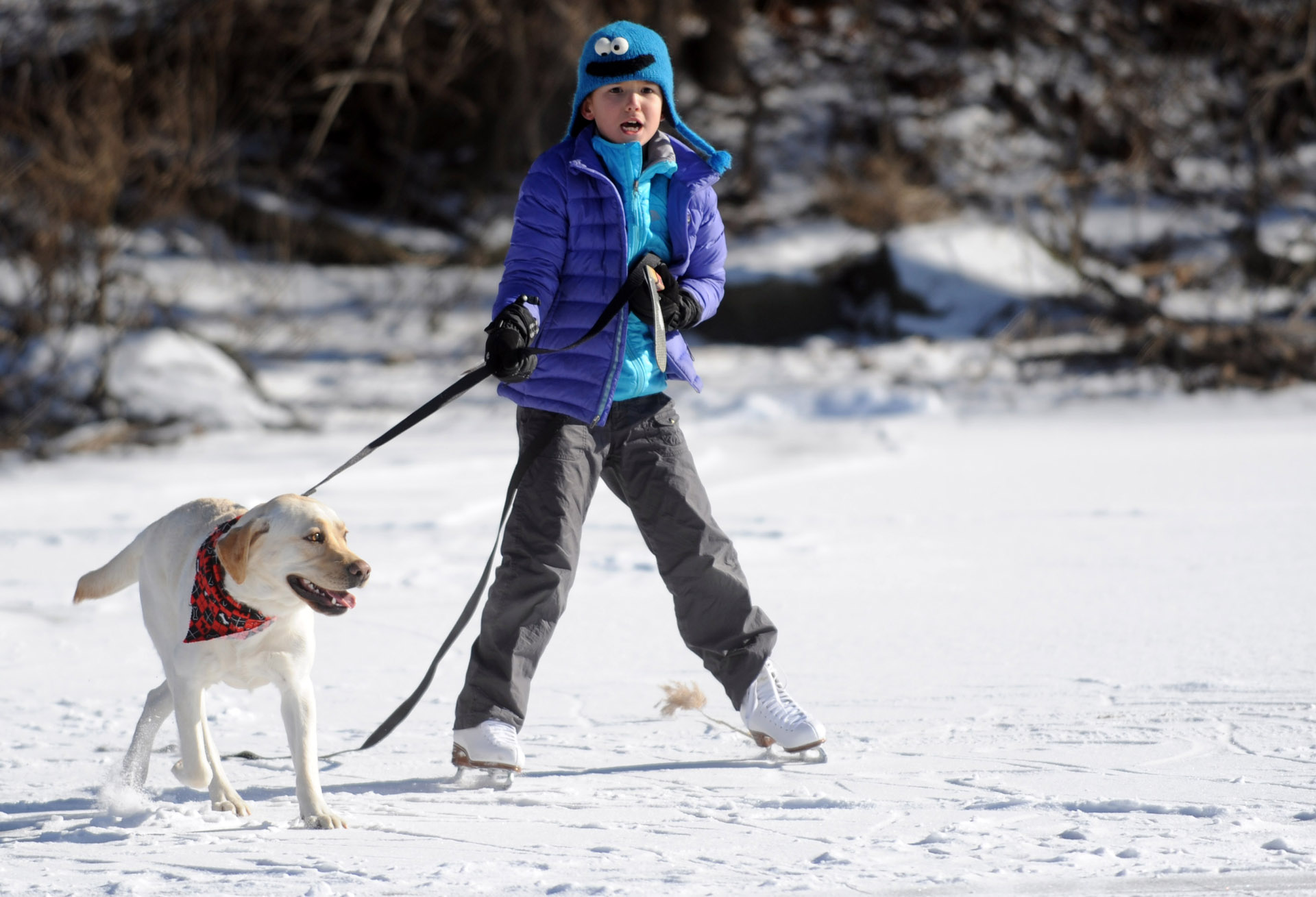 Mimi Sue Novak, 8, gets a pull from Millie as she skates on Gorham's Pond in Darien on Saturday, January 27, 2013.