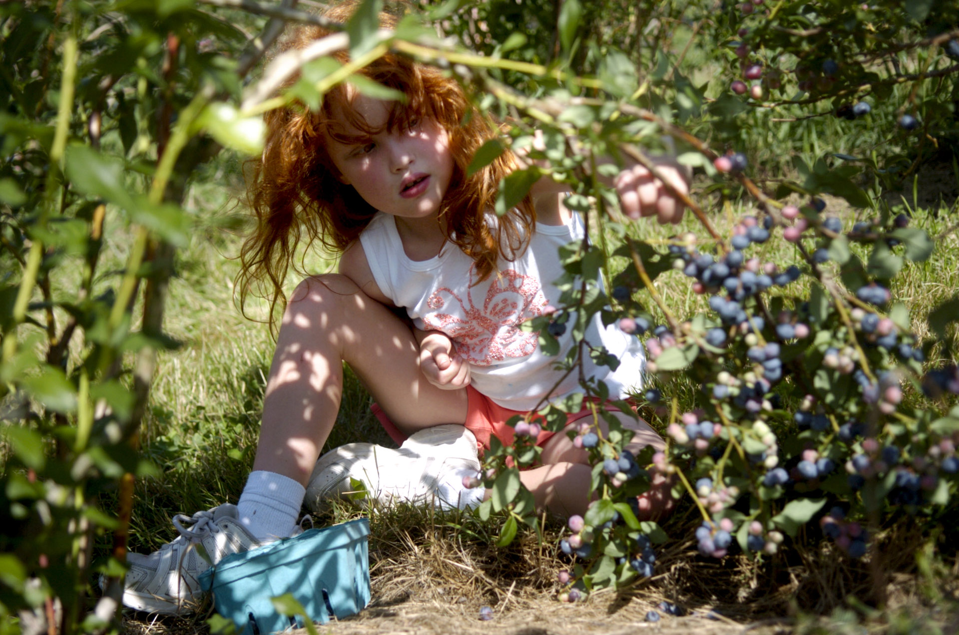 LeeAnn Czujak, 7, of Seymour, picks blueberries with her father at Jones Family Farms in Shelton on Thursday, July 22, 2010.