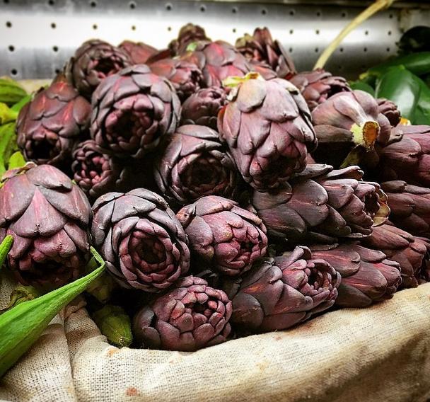 purple artichoke