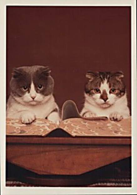 baker-taylor-library-cats