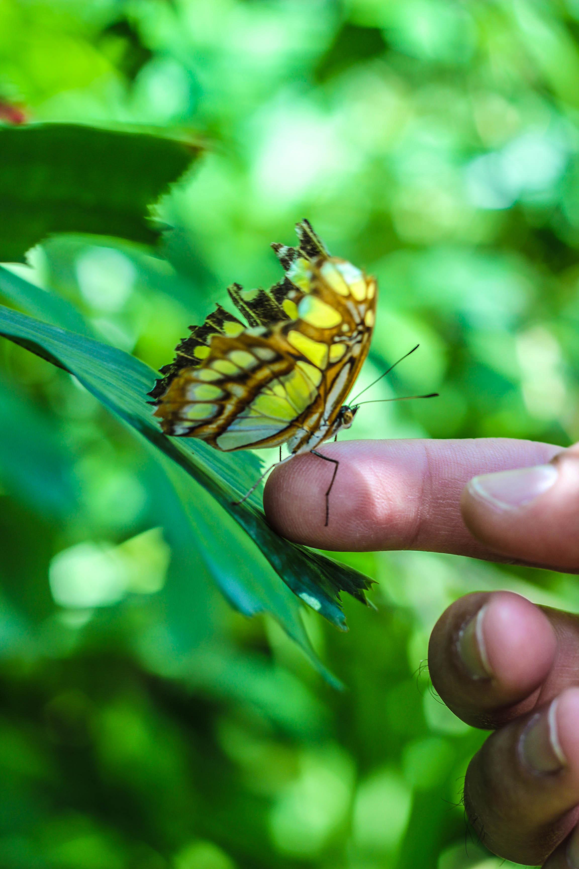 butterfly_farm_aruba