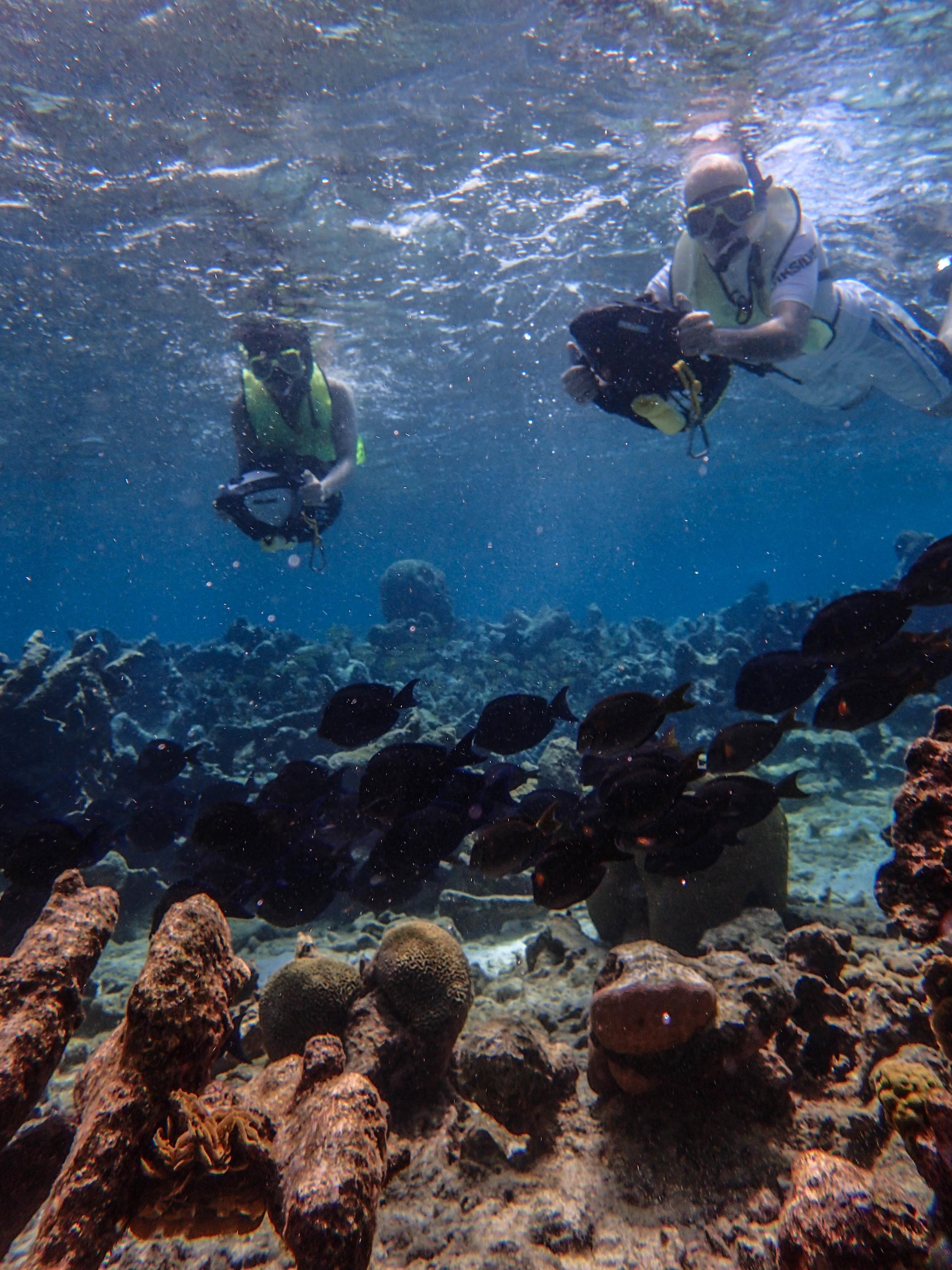 snorkeling_aruba