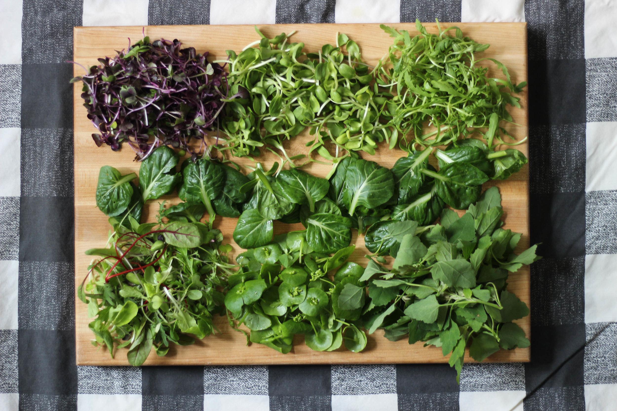 Custom Lettuce Blend - Purple Radish Shoots, Sunflower Shoots, Micro Chrysanthemum, Tatsoi, Micro Mesclun, Miner's Lettuce, Lamb's Quarters