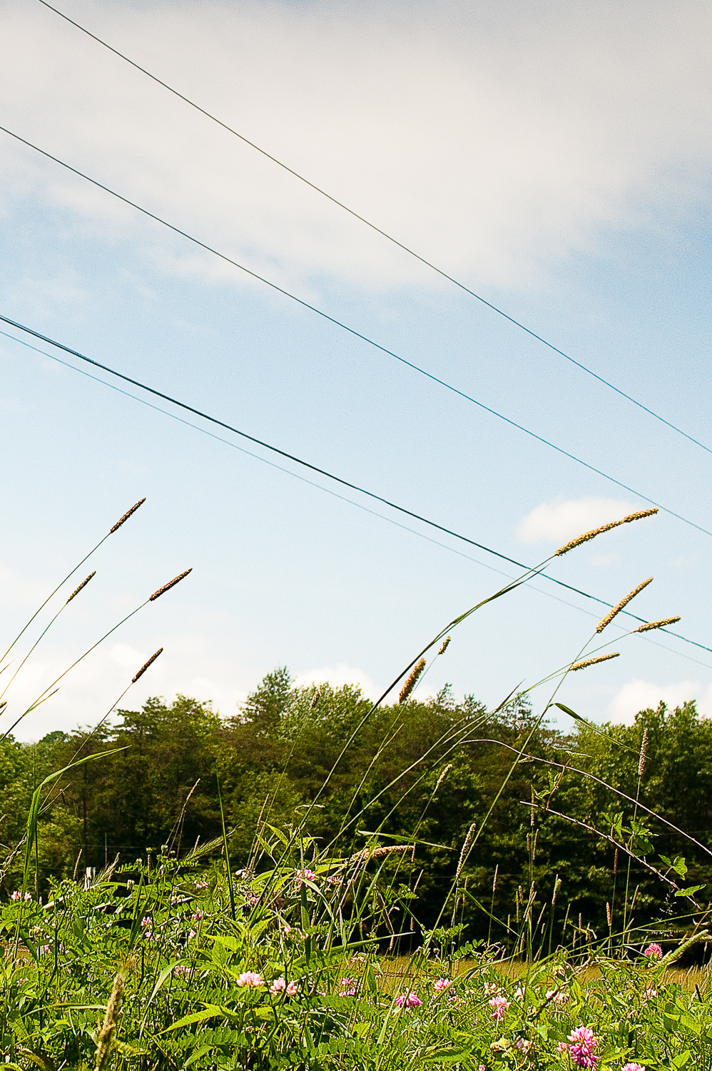 Grass and Telephone Wire  , Huntingdon, PA