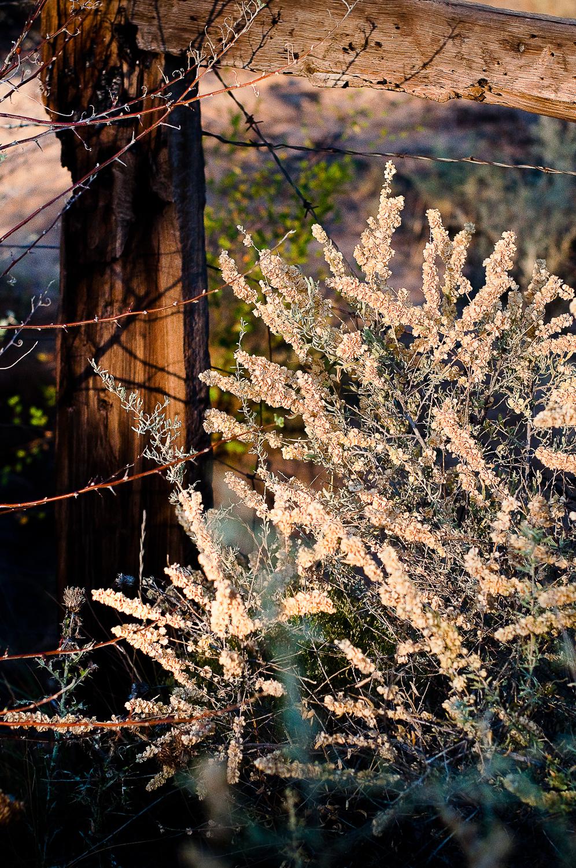 Backyard Fencepost  , San Fidel, NM