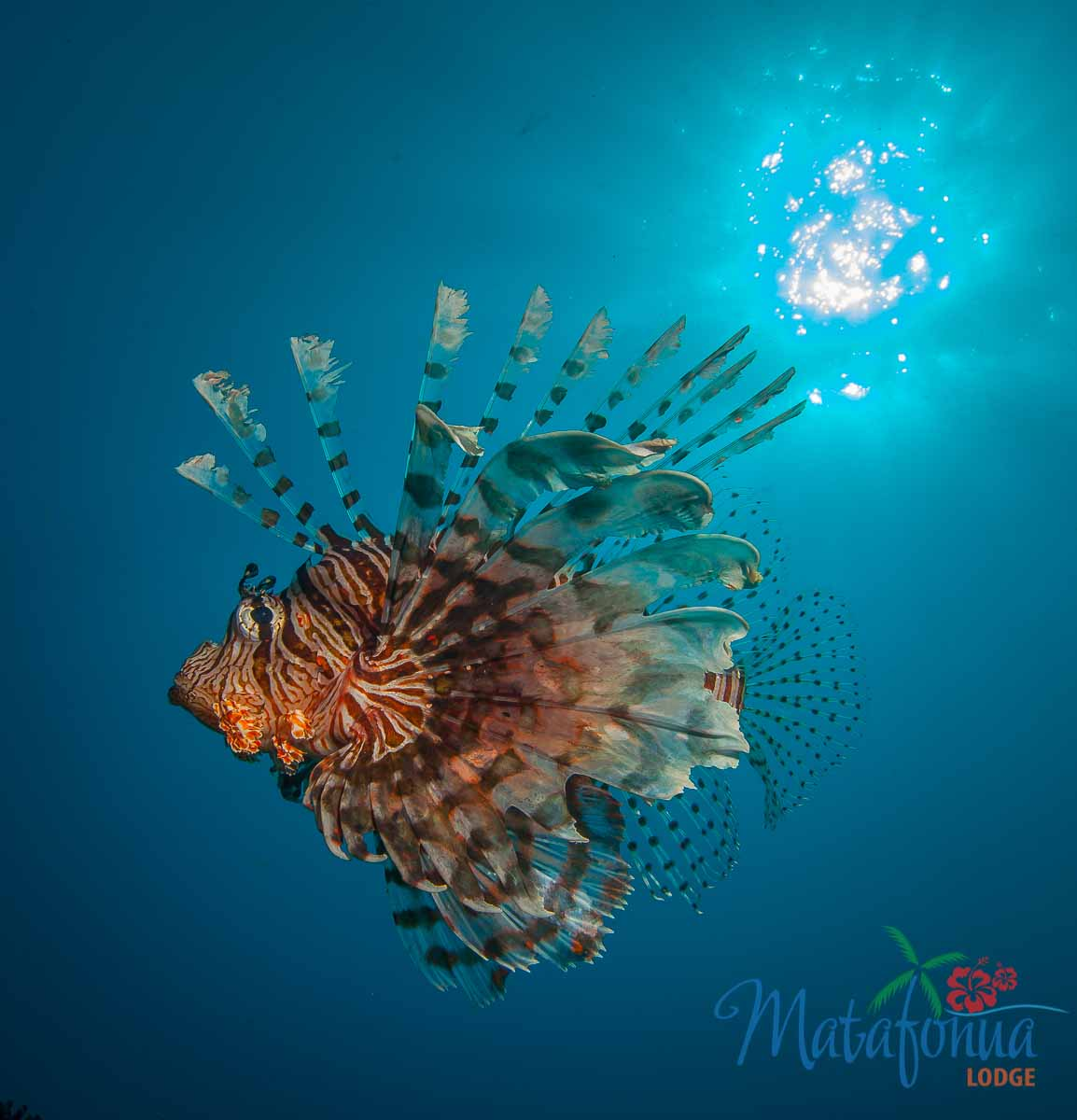 Underwater_00000174.jpg