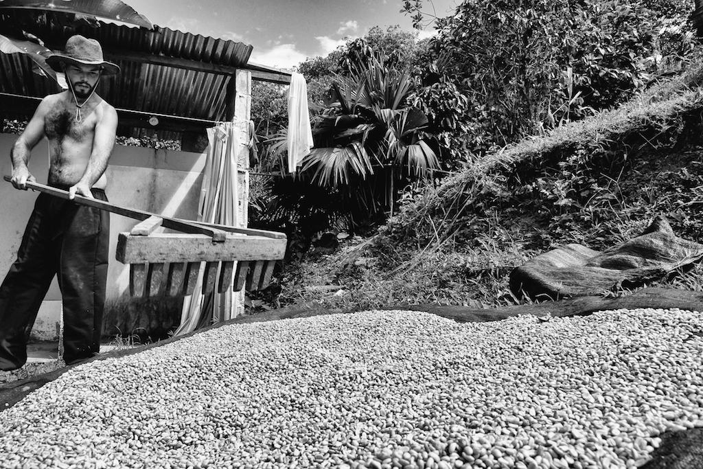 Hiram, a volunteer from Puerto Rico,rakes coffee beans out to dry in the sun