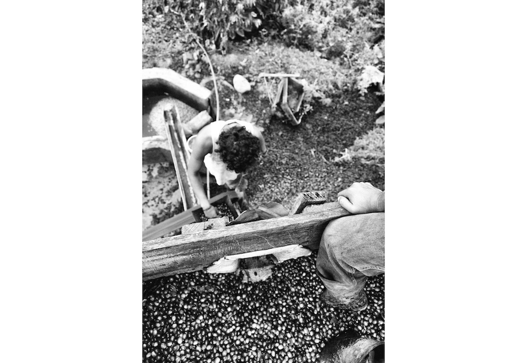 Alfredo and Christian pass the coffee berries through a machine to separate the seed from the husk