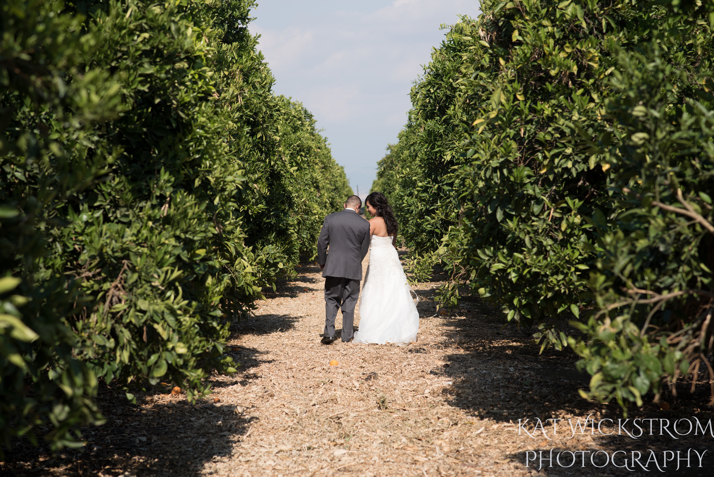 bride and groom in an orange grove