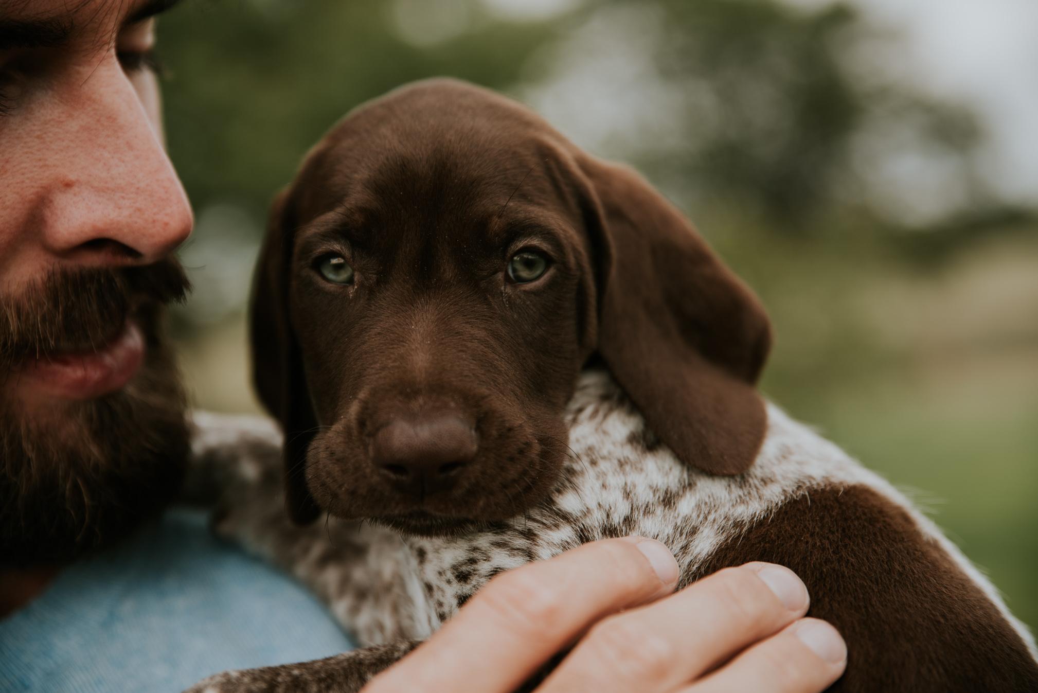 Puppy-7.jpg