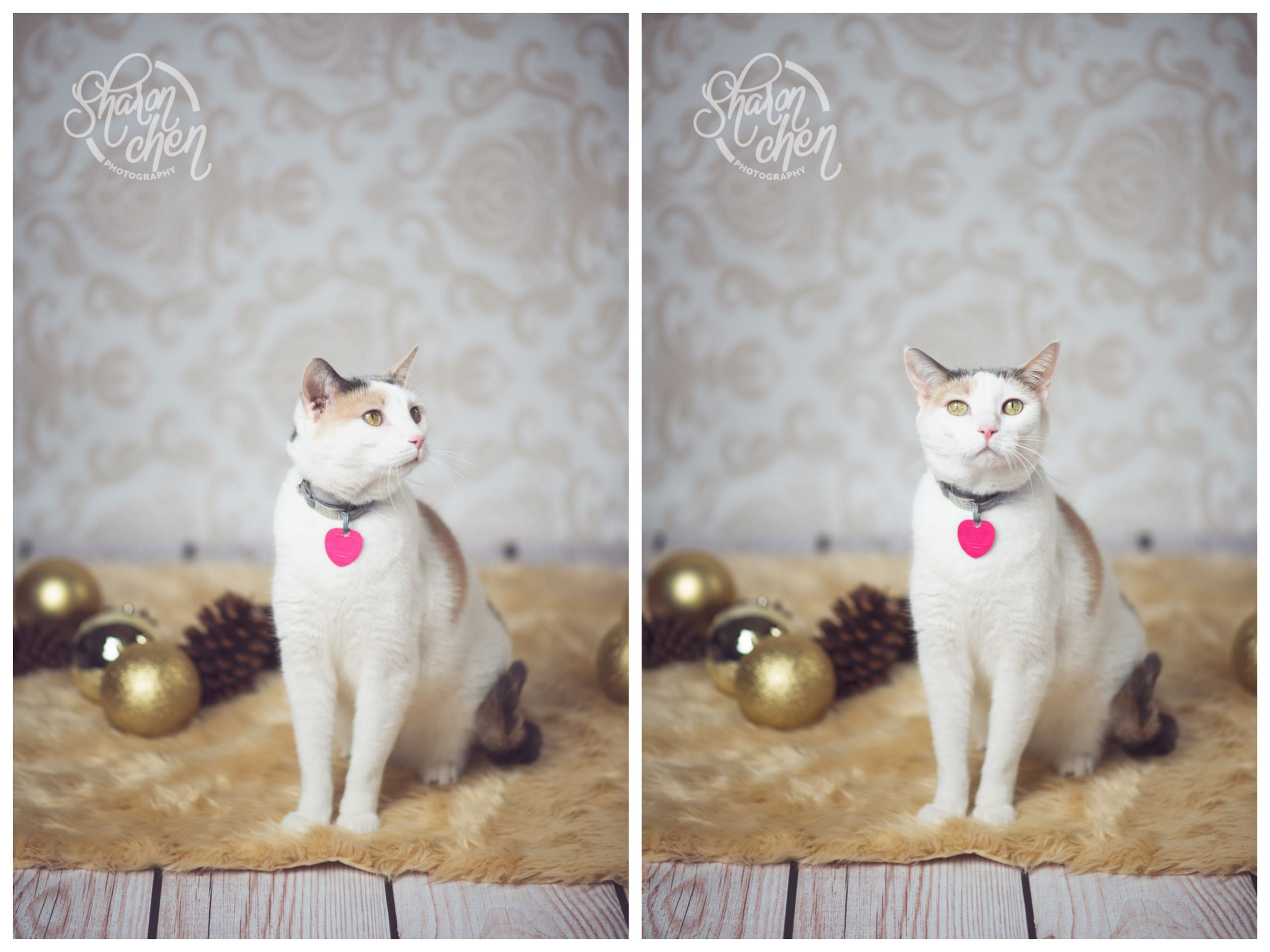How they turned out in the end. Cute kitty!