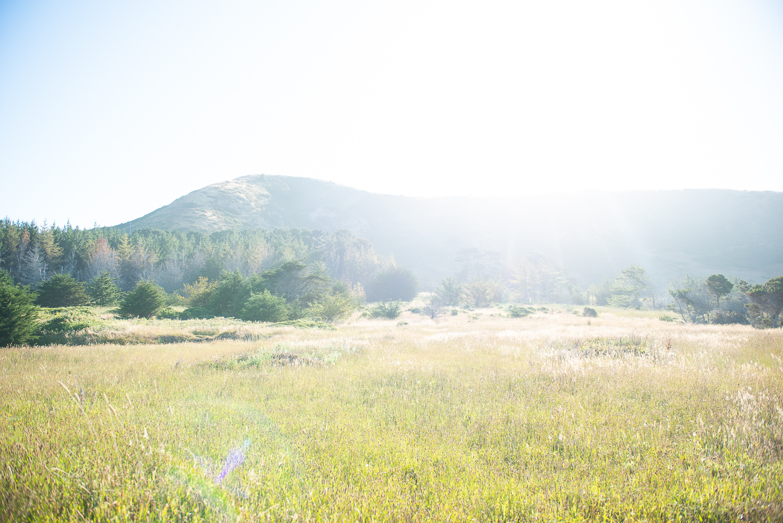 Meadow, Bruhel Point