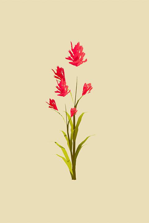 IllustratedNature_Flower_01.jpg