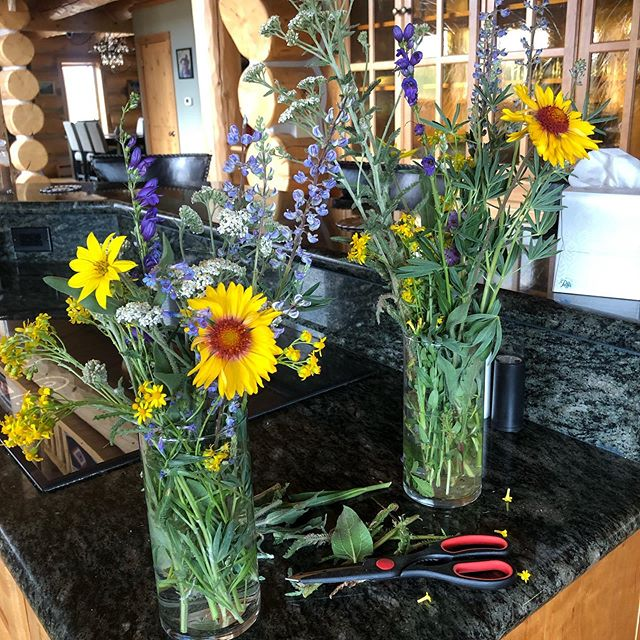 Fresh cut wildflowers #getoutside #artistontheloose #colorado #elevation