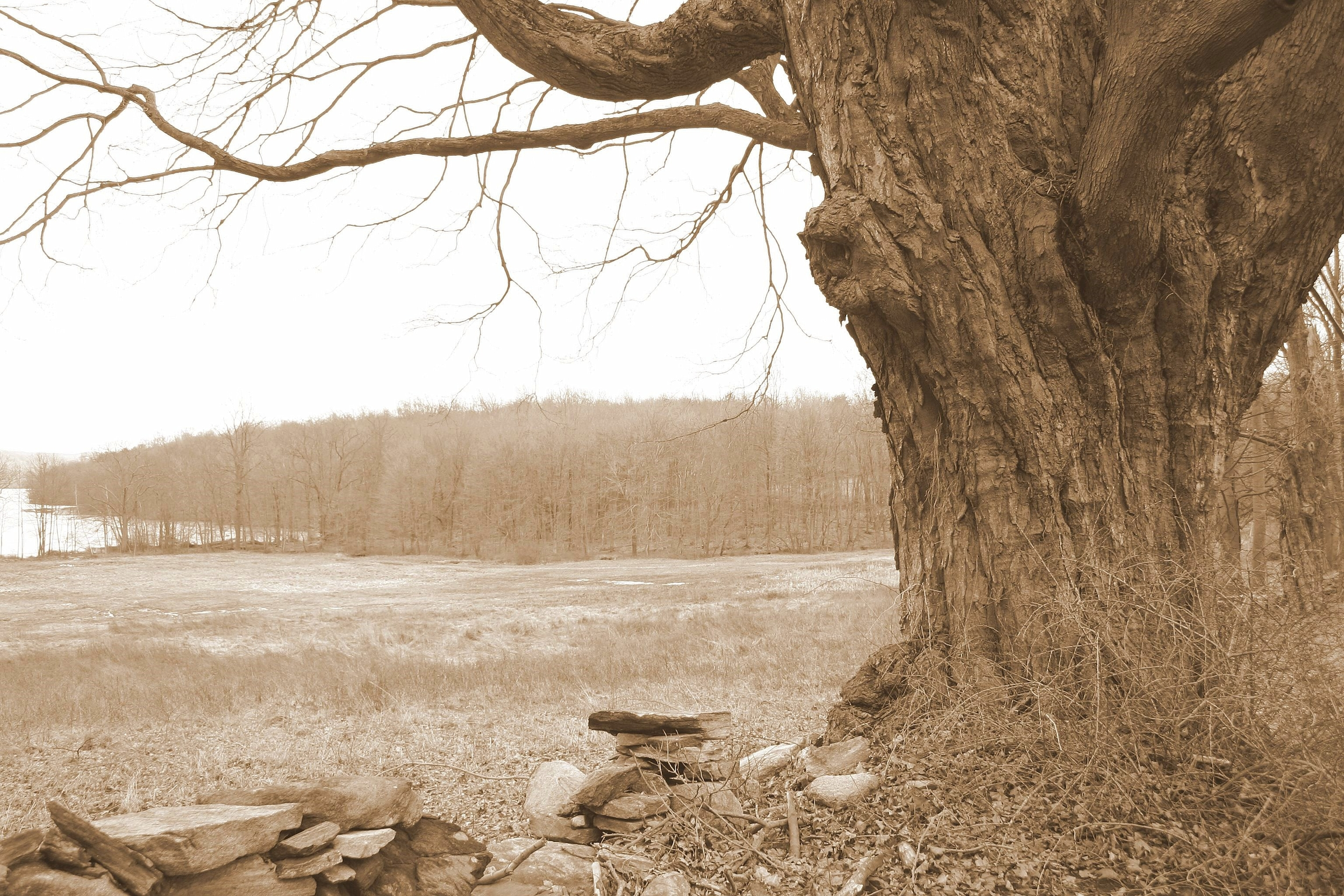 Long Pond Preserve in sepia -2.JPG