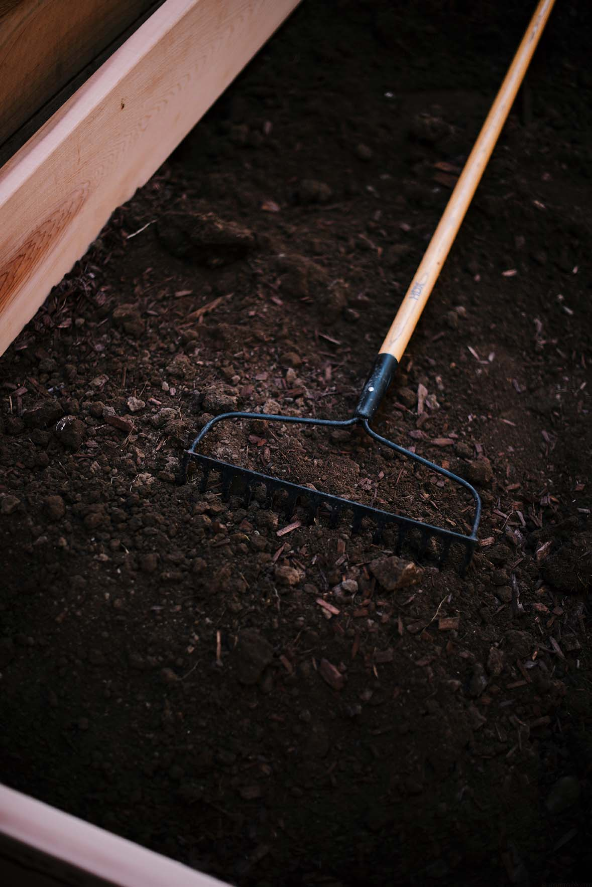 my edible garden | A Brown Table
