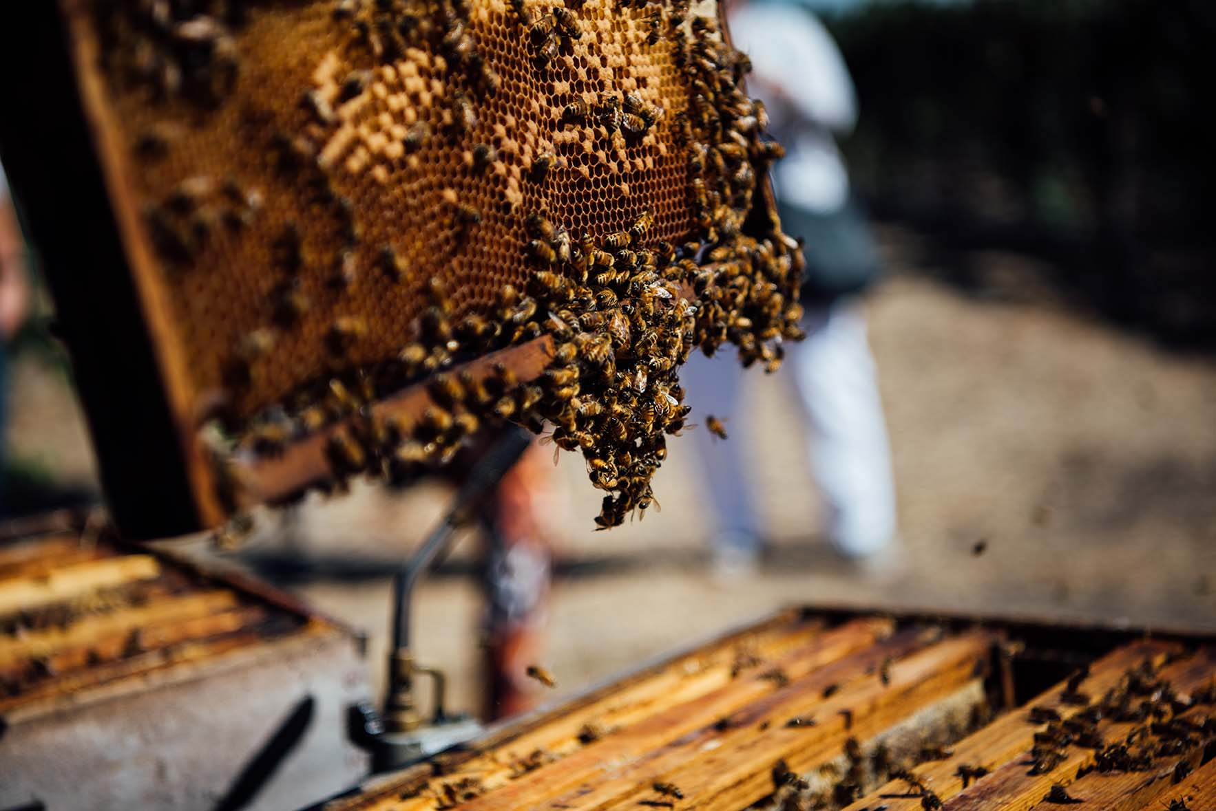 bees at Ramsgate winery, Sonoma, CA | A Brown Table