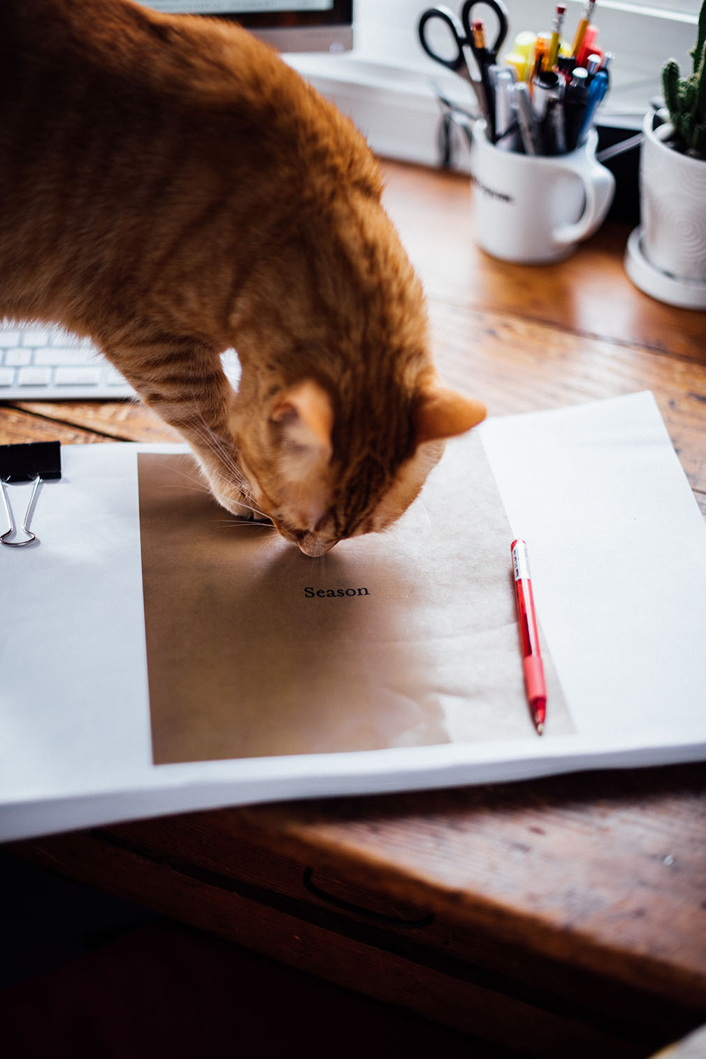 Season - The Book Diaries - Part II - Writing | Nik Sharma