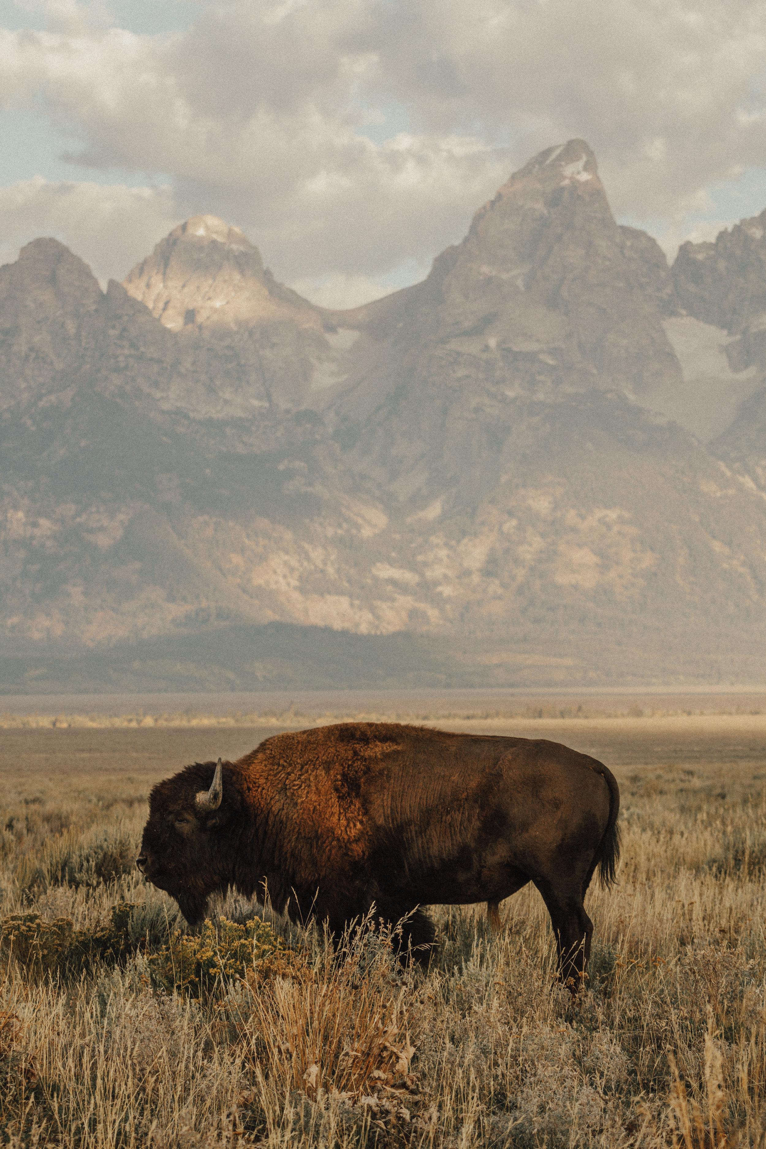 Buffalo-9.jpg