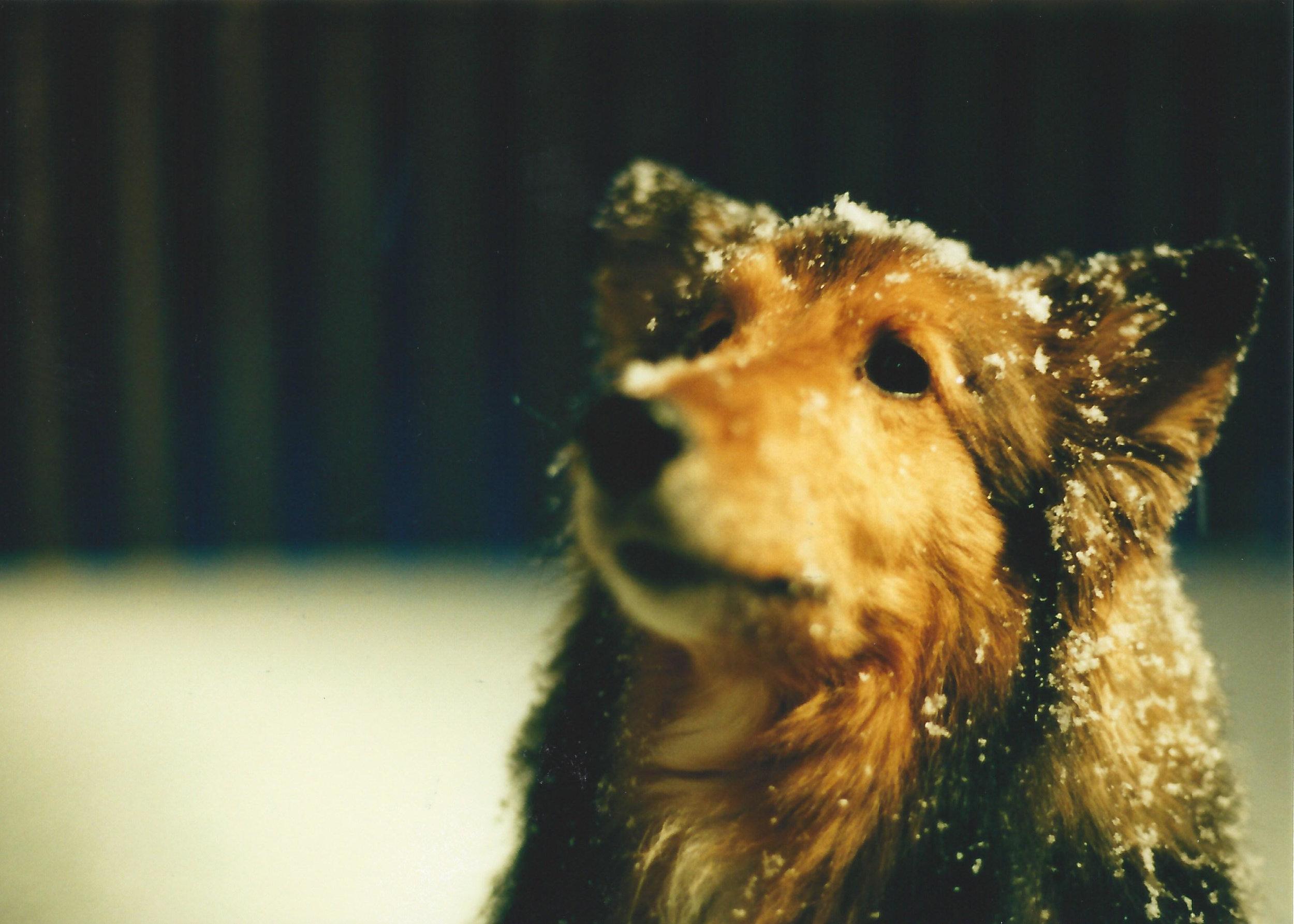 God, I miss that dog. This one still hurts.