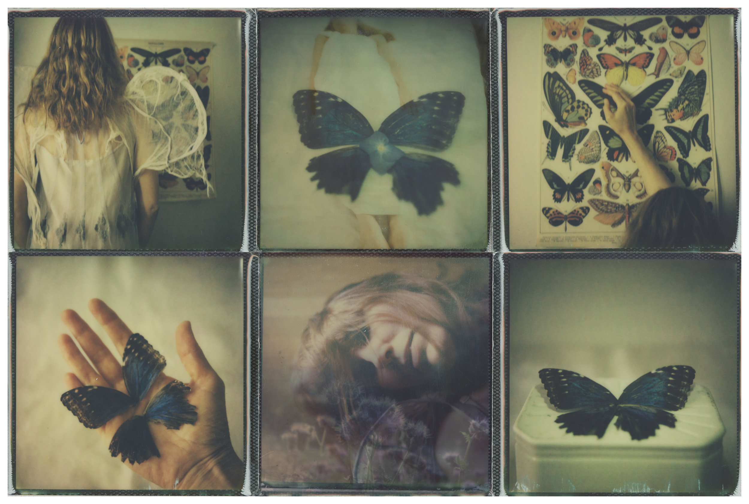 Of Angels and Insects: Memories of Flight
