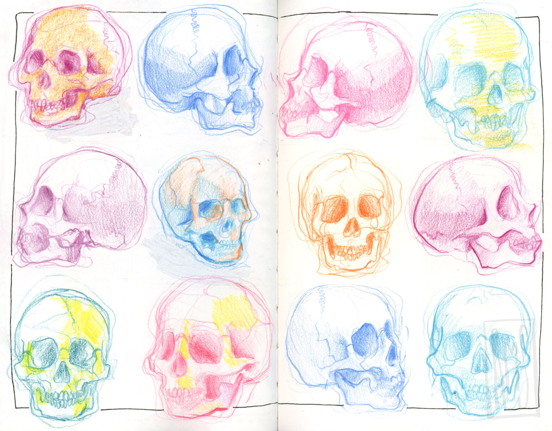 Skull-studies_Web.jpg
