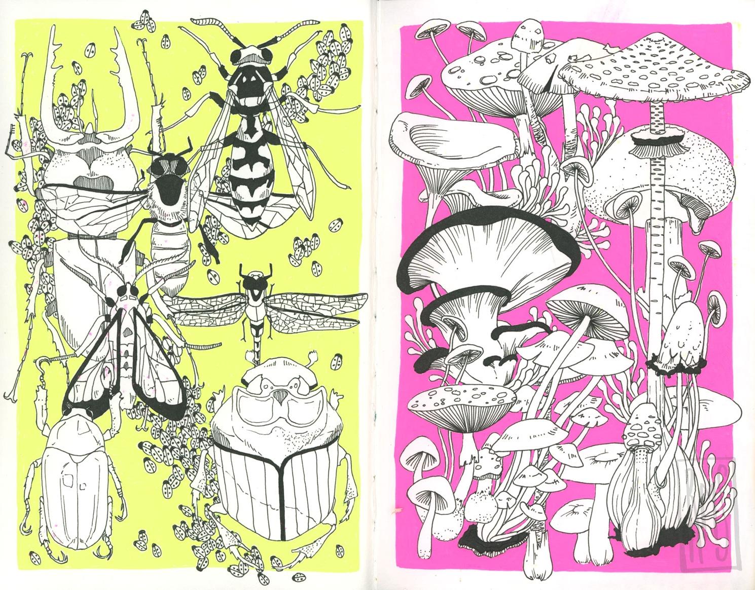 Bugs_Mushrooms_Web.jpg