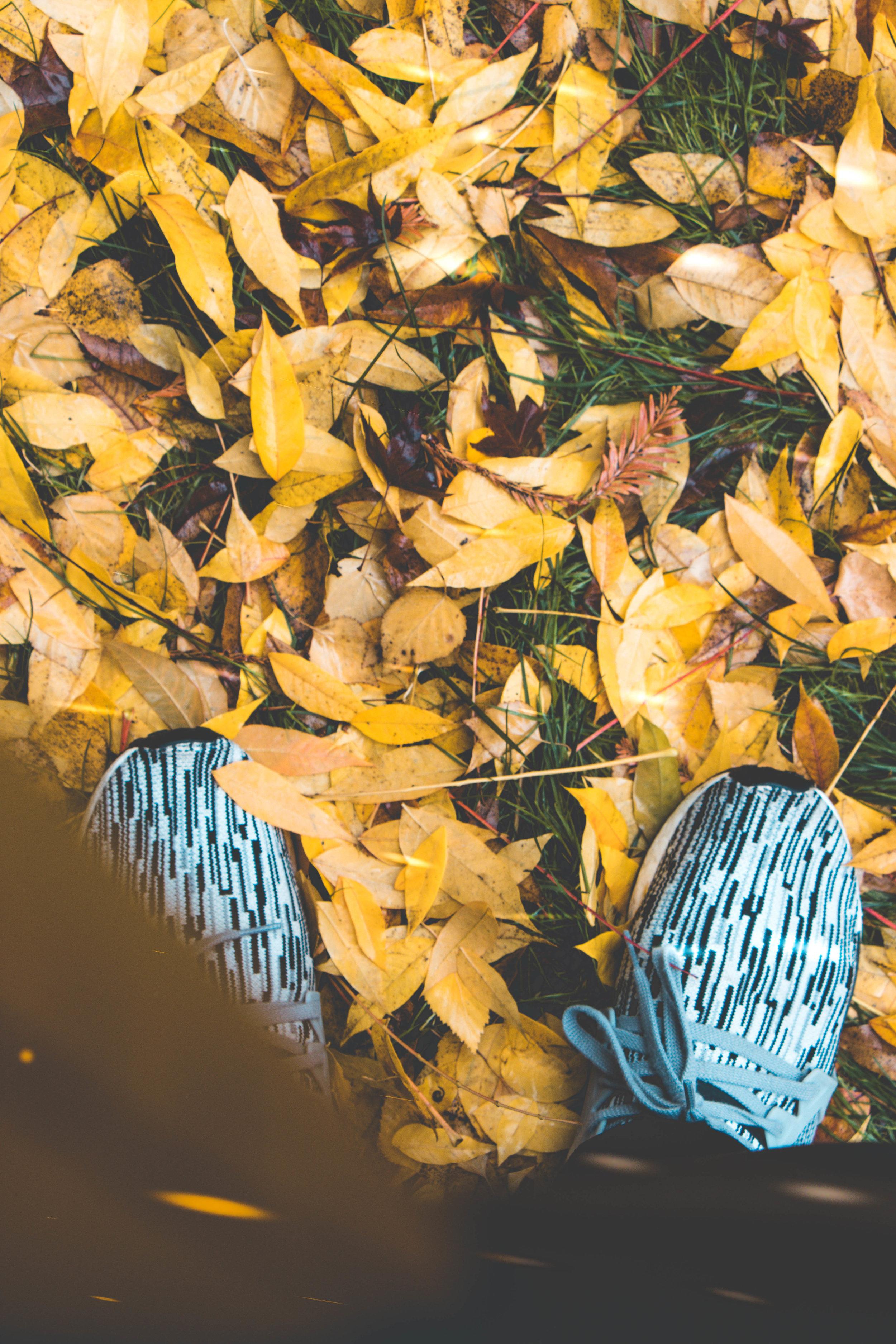 leaf-7030.jpg