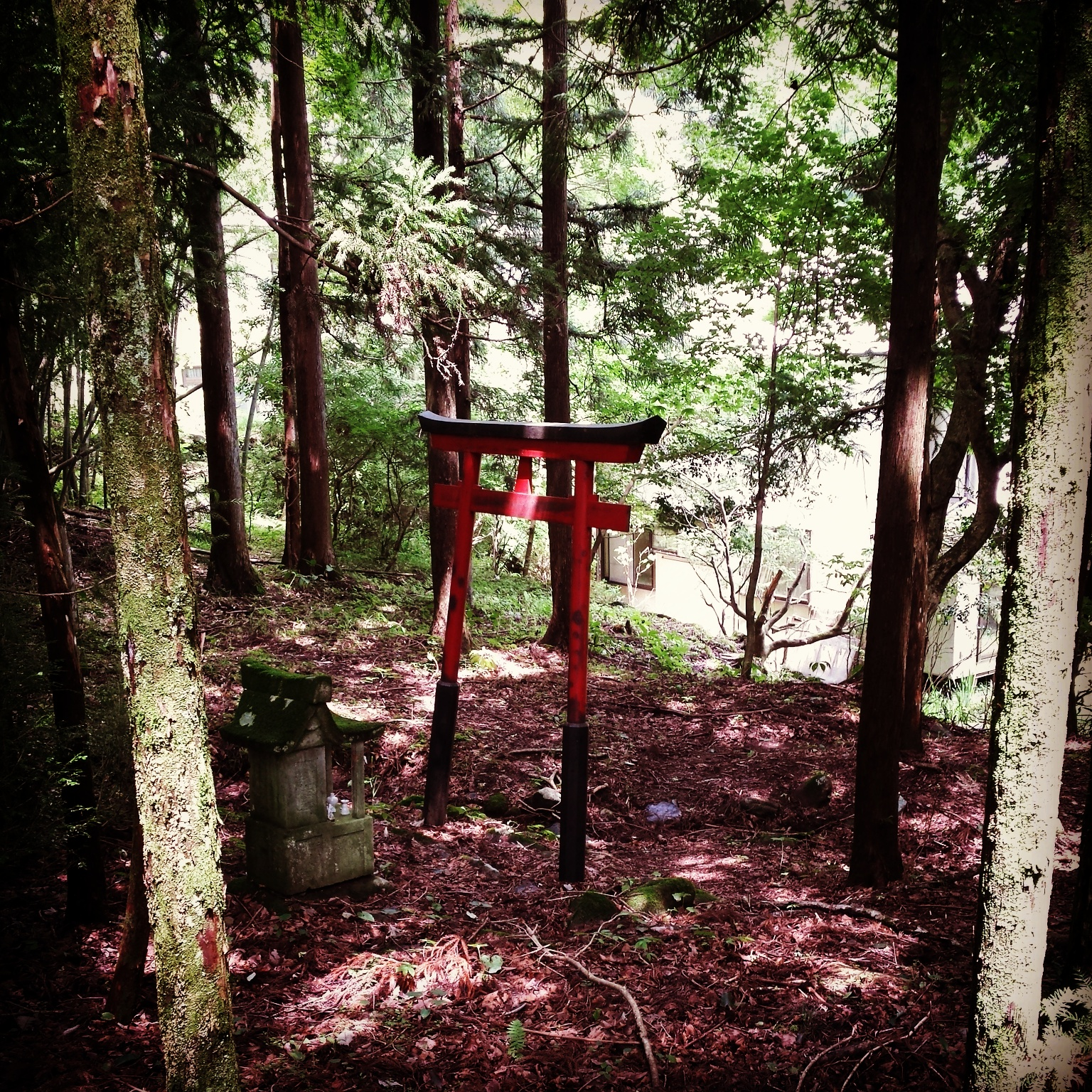 Torii in the wood