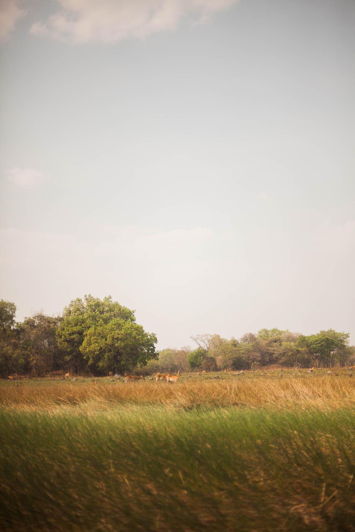 cassandra.dunning-523.jpg