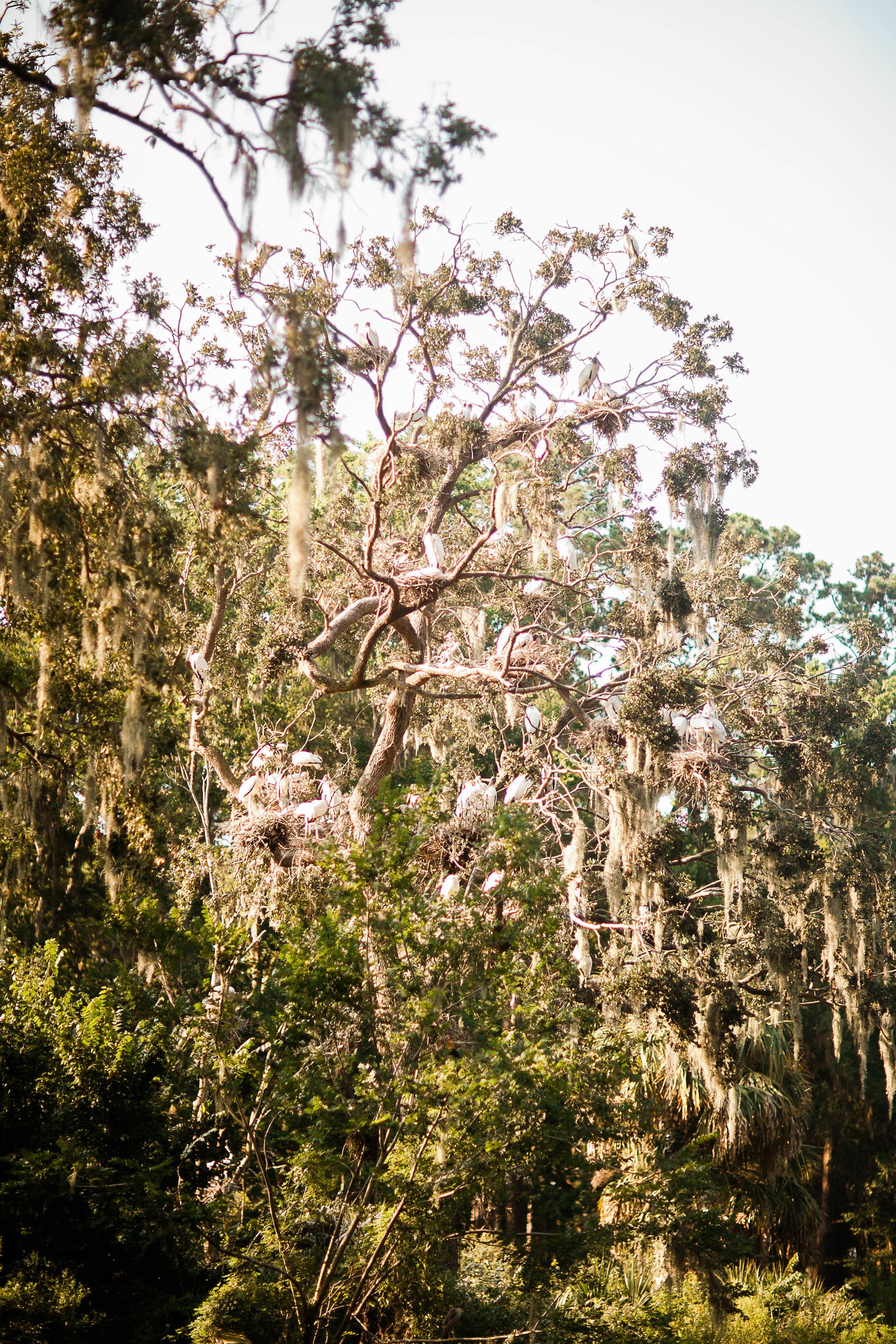 cassandra.dunning-14.jpg