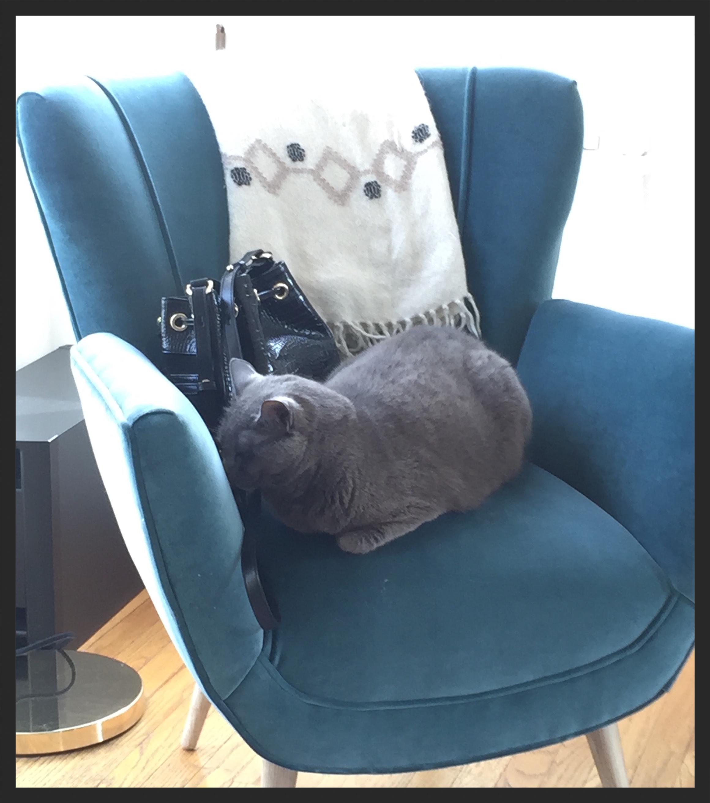 Dakota The Narcoleptic Cat