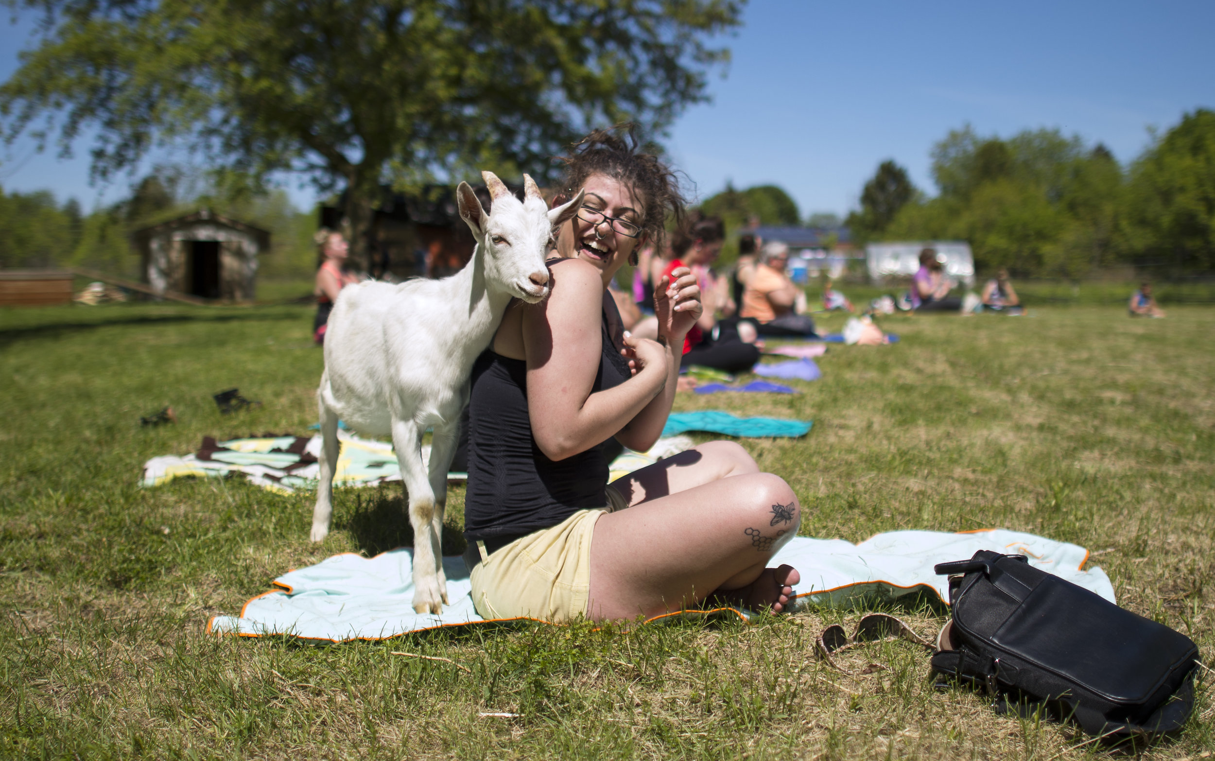 A woman gets a surprise visit from one of the many goats during a goat yoga session at Growing Hopes Farm in Cambridge, Ont. on June 03, 2017.
